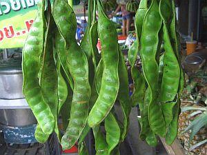 Koh-Phangan-Thailand-0_CIMG0034